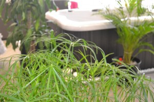 Spa Garden Leisure